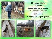 Тверской приют  для собак  в Больших Перемерках.